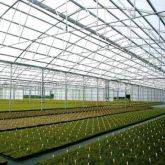 Greenhouse Poly